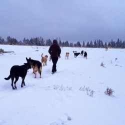 Fb-Jamie walking in snow w_pups
